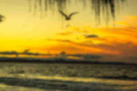 Sea Eagle Sunset