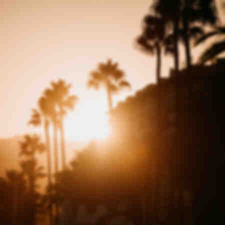 Palmier Coucher de Soleil Côte d'Azur