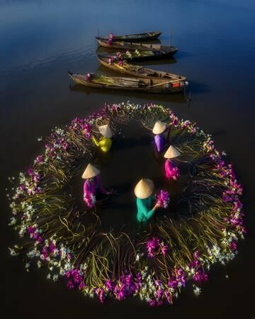 Lilies Harvest 02