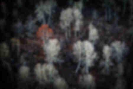 Het slapende bos