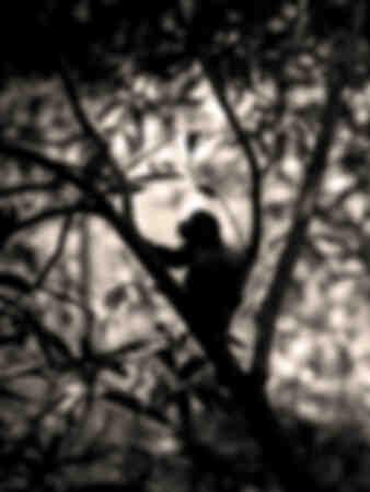 denkender Schatten
