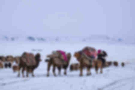 Die mongolische Karawane