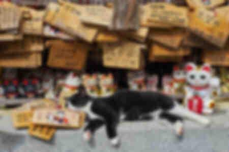 Le chat du temple