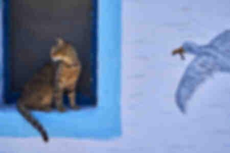 Die Katze und der Vogel