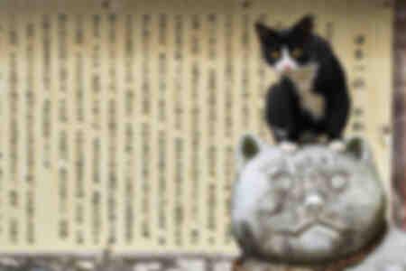 Tête à chat