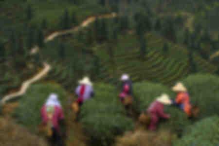 El jardín de los mil té